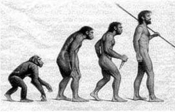 external image evolucin_del_homo_sapiens_med.jpg